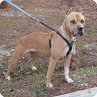 Adopt A Pet :: Tootsie - Burgaw, NC