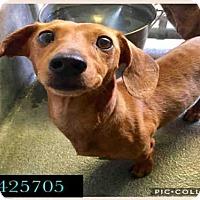 Adopt A Pet :: A425705 - San Antonio, TX