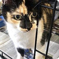 Adopt A Pet :: Sassy - Island Park, NY