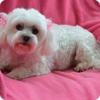 Adopt A Pet :: Candy - Westport, CT