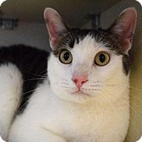 Adopt A Pet :: Oak - Chicago, IL