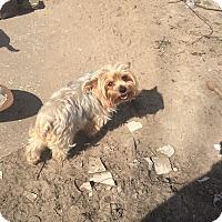 Adopt A Pet :: Caleb - New Orleans, LA