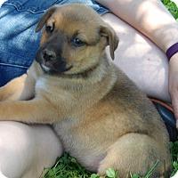 Adopt A Pet :: Sport (6 lb) Video - Sussex, NJ