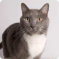 Adopt A Pet :: Griffin - Wilmington, DE