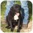 Photo 2 - Labrador Retriever/Boxer Mix Dog for adoption in Tyler, Texas - TG-Adrianna