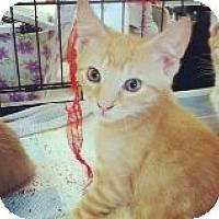Adopt A Pet :: Darren - Riverside, RI