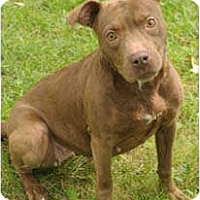 Adopt A Pet :: Fifi - Chicago, IL