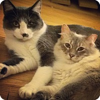 Adopt A Pet :: Nanuq - Chicago, IL