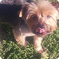 Adopt A Pet :: PEANUT - New Windsor, NY