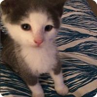 Adopt A Pet :: Nick - Edmonton, AB