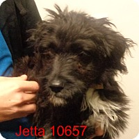 Adopt A Pet :: Jetta - Greencastle, NC