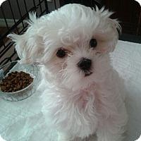 Adopt A Pet :: Jeremy - Covina, CA