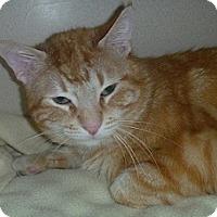 Adopt A Pet :: Greg - Hamburg, NY