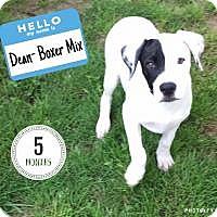 Adopt A Pet :: Dean - Marlton, NJ