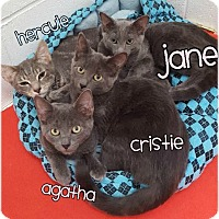Adopt A Pet :: Jane 2016153 - Huntington, NY