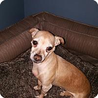 Adopt A Pet :: Chet - Morganville, NJ