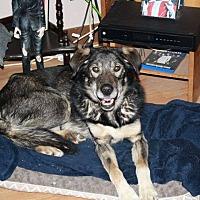 Adopt A Pet :: TUCKER-companion dog - Lucknow, ON