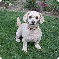Adopt A Pet :: MICHAEL - Newport Beach, CA
