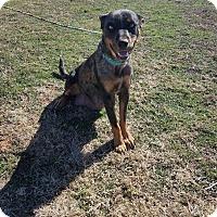 Adopt A Pet :: Lyla - New Milford, CT