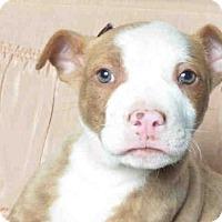 Adopt A Pet :: RIVER - Ukiah, CA
