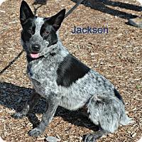 Adopt A Pet :: Jackson - Yreka, CA
