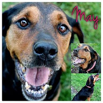 Rottweiler Mix Dog for adoption in Garden City, Michigan - May