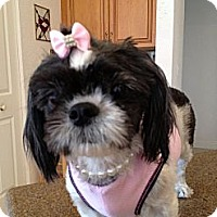 Adopt A Pet :: Britney - Davie, FL