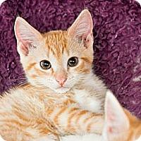 Adopt A Pet :: Dylan - Bradenton, FL