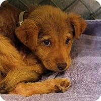 Adopt A Pet :: Reese Pup - Athens, GA