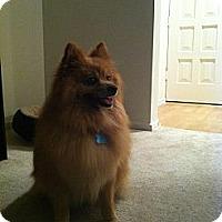 Adopt A Pet :: Toby - West Hills, CA
