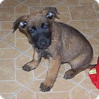 Adopt A Pet :: Myra - Denver, IN