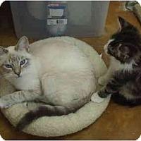 Adopt A Pet :: Chris - Lake Charles, LA