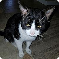 Adopt A Pet :: Ollie - Redding, CA