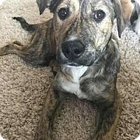 Adopt A Pet :: Lacey - Wyoming, MI