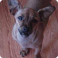 Adopt A Pet :: Tater - Denver, CO