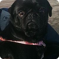 Adopt A Pet :: Lily - Hinckley, MN