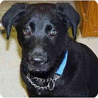 Adopt A Pet :: Little Bear - YERINGTON, NV