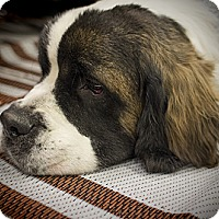 Adopt A Pet :: SUGAR - Glendale, AZ