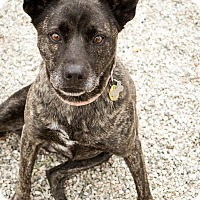 Adopt A Pet :: Hannah - Acton, CA