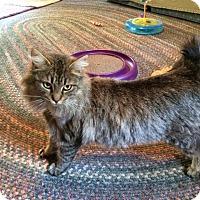 Adopt A Pet :: Katrina - McDonough, GA