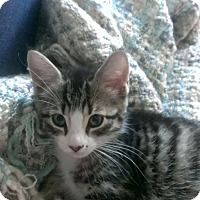Adopt A Pet :: Kim - Port Republic, MD