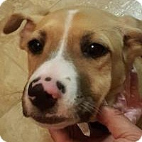 Adopt A Pet :: Fennel - Marlton, NJ