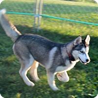 Adopt A Pet :: Brice - Prole, IA