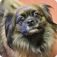Adopt A Pet :: Beans - Winters, CA