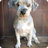 Adopt A Pet :: LooLoo - Fredericksburg, TX