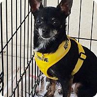 Adopt A Pet :: Torie - Durham, NC