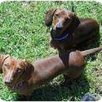 Adopt A Pet :: Buddy Boy & Max - San Jose, CA