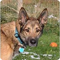 Adopt A Pet :: Betsy - Hamilton, MT