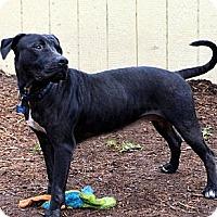 Adopt A Pet :: Rosebud - Houston, TX