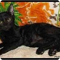 Adopt A Pet :: Mauli - Orlando, FL